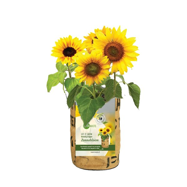 Growbag Sunflower SuperWaste Ditha Bonita