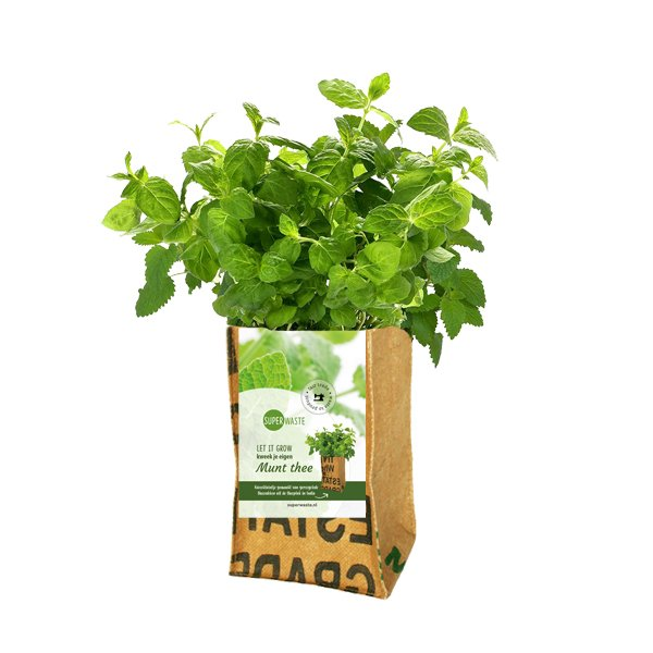 Growbag Mint SuperWaste Ditha Bonita